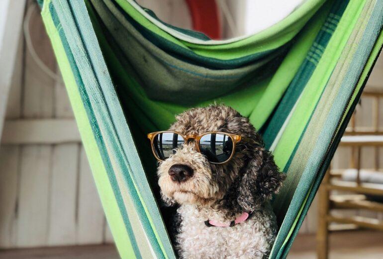 Les vacances, c'est pour tout le monde!